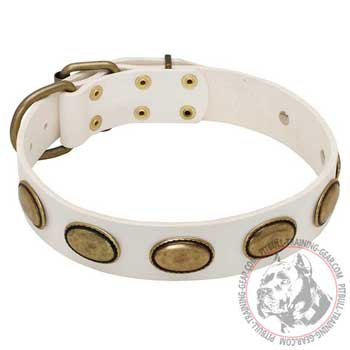 Walking White Leather Pit Bull Collar with Oval Brass Plates