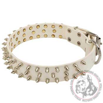 White Leather Pit Bull Collar with Beautiful Blunted Nickel-Plated Spikes
