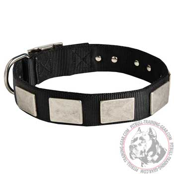 Training Plated Nylon Pit Bull Collar