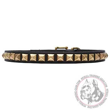 Pit Bull Dog Collar with Rustproof Studs
