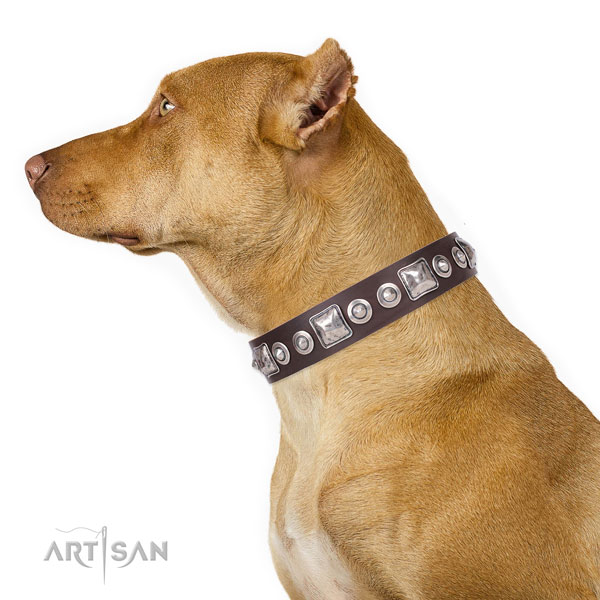 Unusual embellished natural leather dog collar for daily use