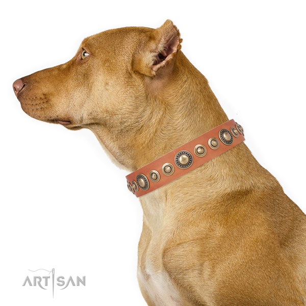 Corrosion proof buckle and D-ring on leather dog collar for walking