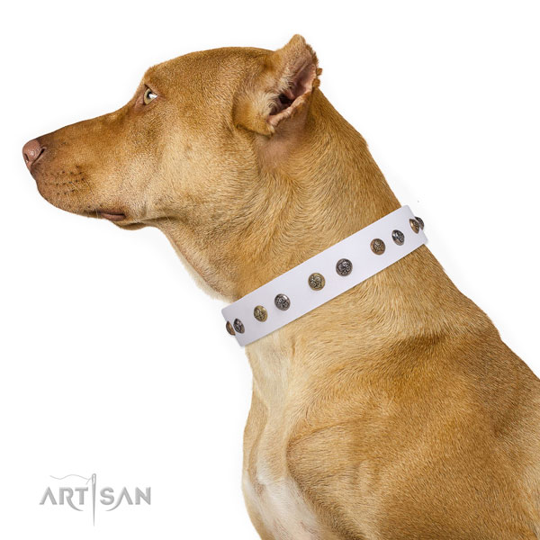 Daily walking decorated dog collar made of top rate natural leather