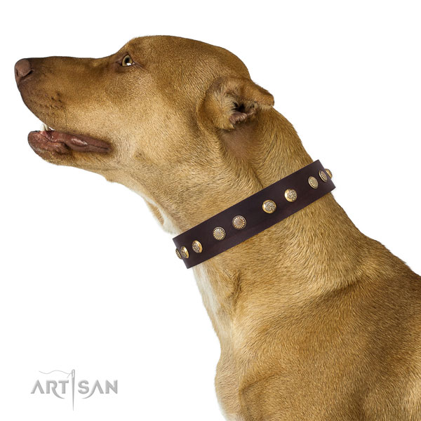 Stunning decorations on everyday use genuine leather dog collar