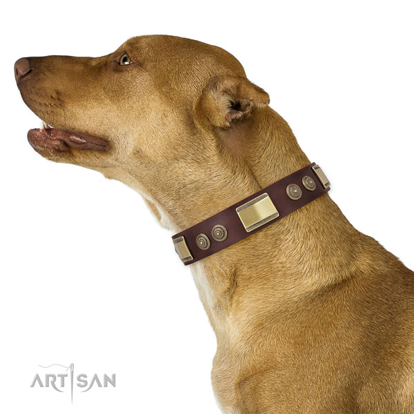 Amazing decorations on handy use dog collar