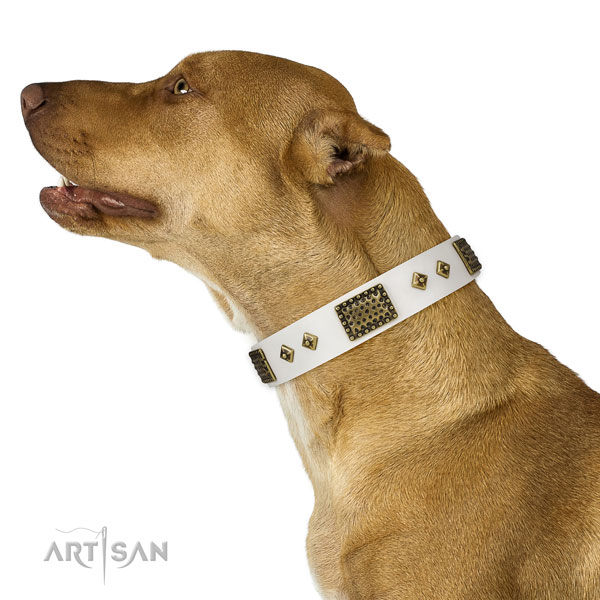 Basic training dog collar of genuine leather with remarkable embellishments