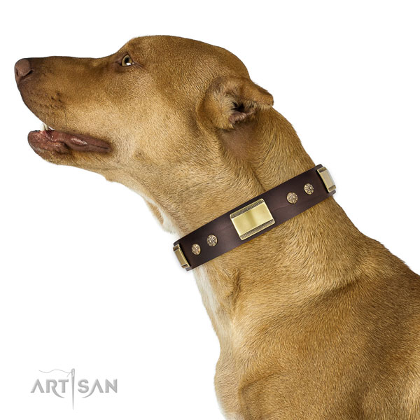 Daily walking dog collar of leather with trendy studs