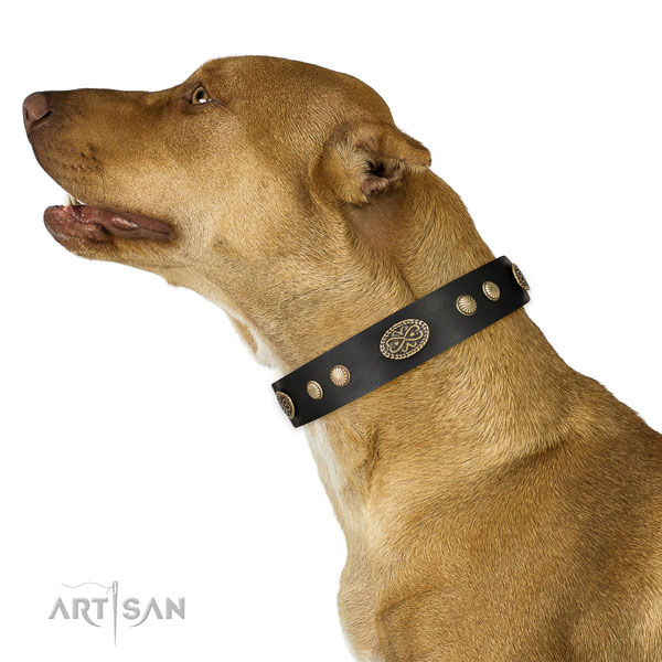 Corrosion proof traditional buckle on leather dog collar for handy use