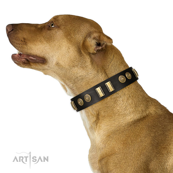 Corrosion proof traditional buckle on natural leather dog collar for everyday use