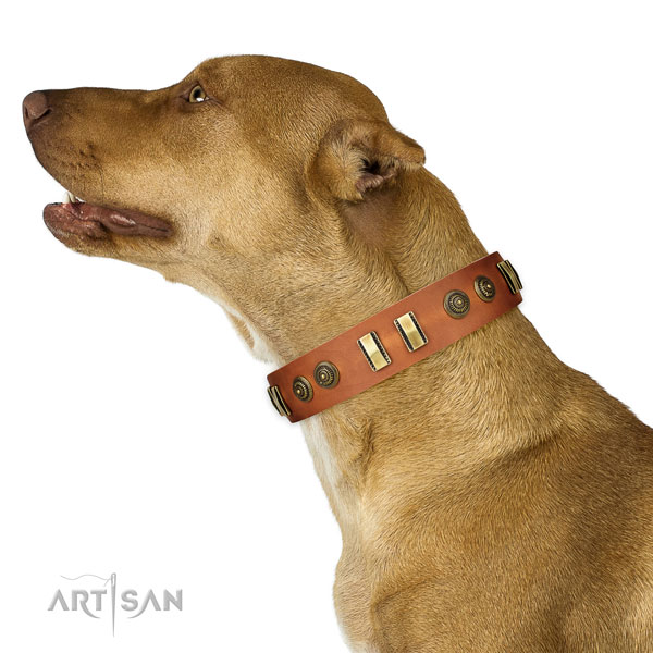 Corrosion proof traditional buckle on full grain natural leather dog collar for everyday walking