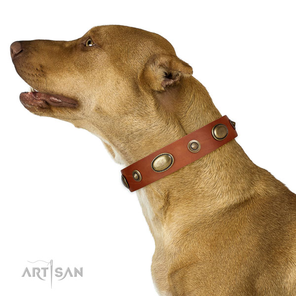 Handy use dog collar of genuine leather with trendy adornments
