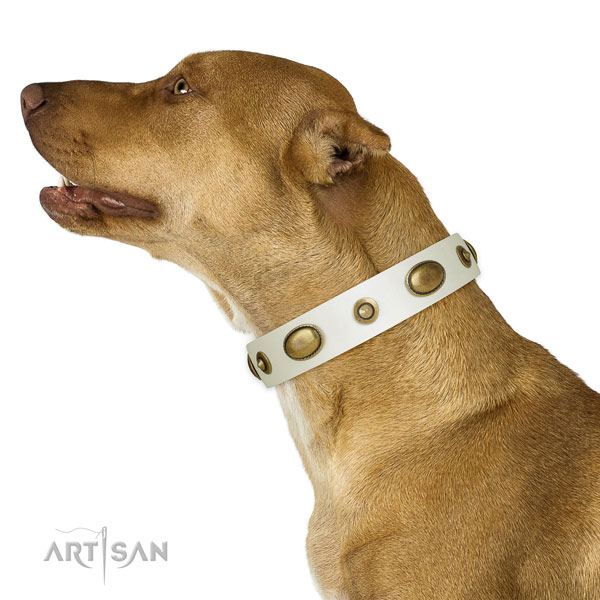 Basic training dog collar of leather with stunning embellishments
