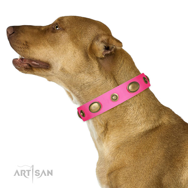Handy use dog collar of leather with top notch decorations
