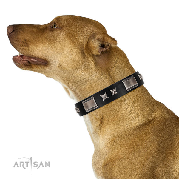 Everyday walking high quality genuine leather dog collar with embellishments