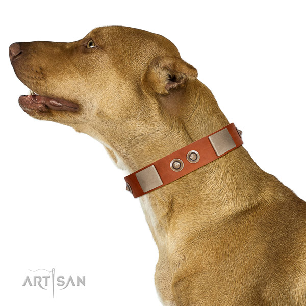 Durable fittings on natural genuine leather dog collar for fancy walking