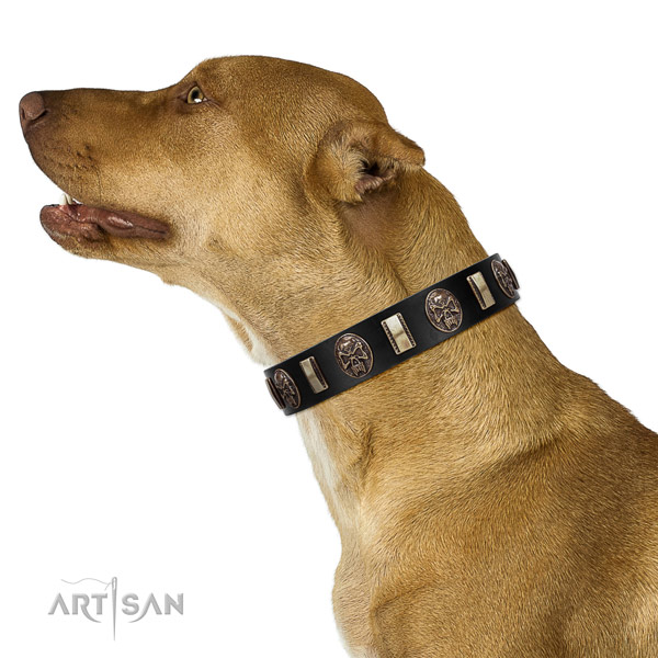 Full grain genuine leather collar with studs for your handsome four-legged friend