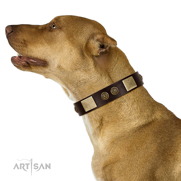 Basic training dog collar of natural leather with unusual embellishments