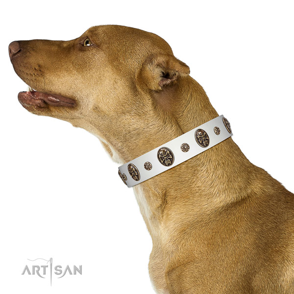 Everyday use dog collar of natural leather with fashionable embellishments