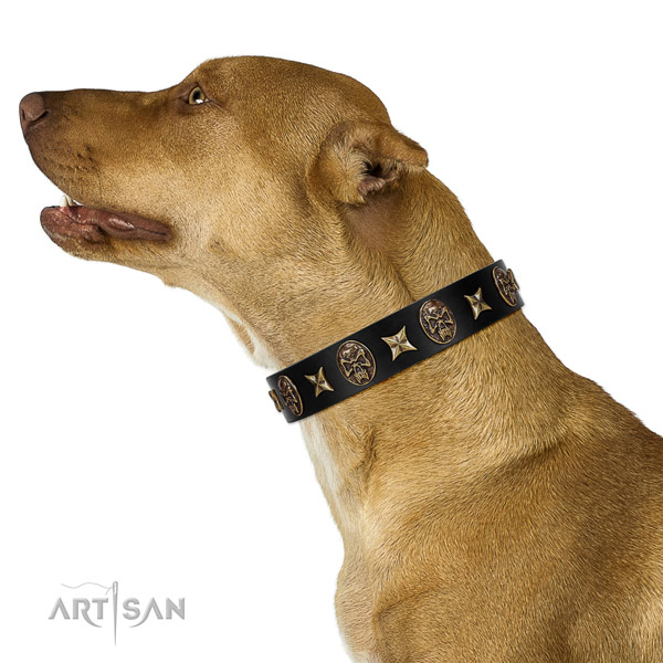 Everyday walking dog collar of natural leather with inimitable adornments
