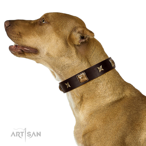 Top notch natural leather dog collar with studs