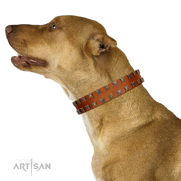 Gentle to touch full grain natural leather dog collar with embellishments for your pet