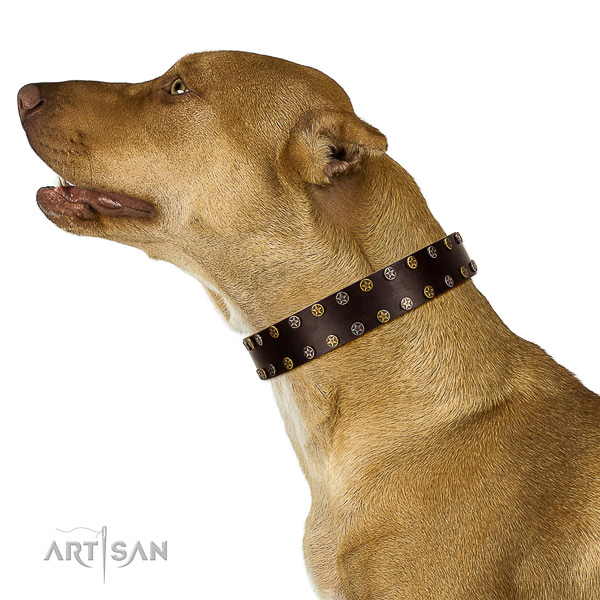 Stylish walking full grain natural leather dog collar with decorations