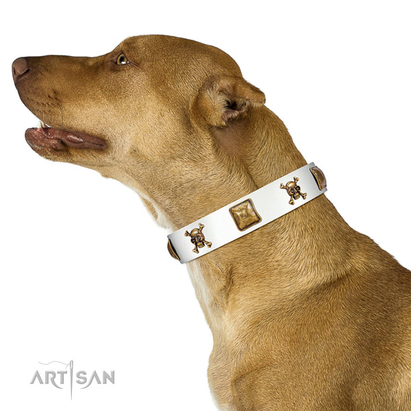 Top notch full grain leather dog collar with durable adornments