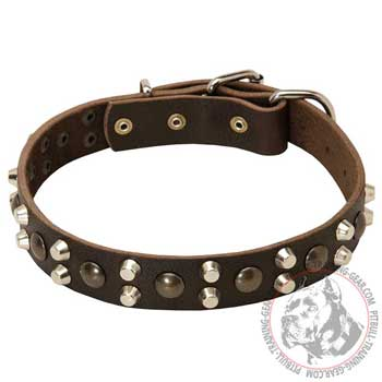 Pitbull Collar Decorated with Nickel Pyramids and Brass Half-Ball Studs