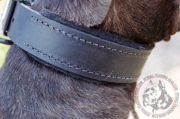 Felt Padded Leather Dog Collar for Pitbull Walking