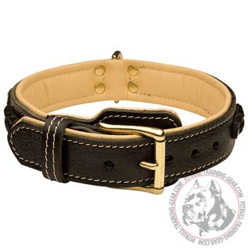 Padded Leather Pitbull Collar with Brass Hardware for Proper Pet Handling