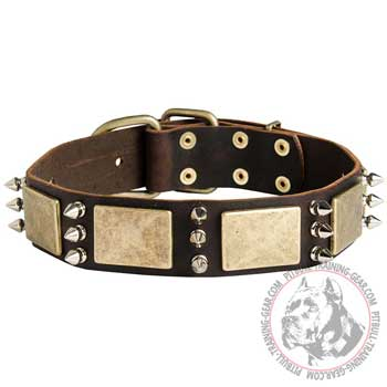 Leather Pitbull Collar with Nickel Plated Spikes