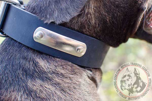 Walking Leather Pitbull Collar with Name Tag