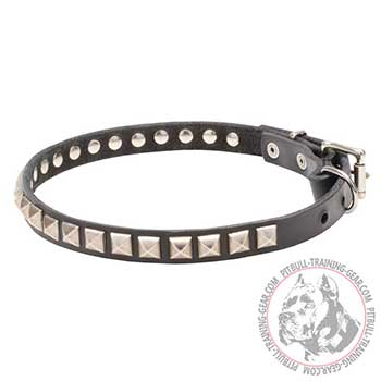 Full grain natural leather Pitbull collar with studs