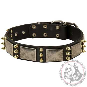 Spiked and Plated leather Pitbull collar