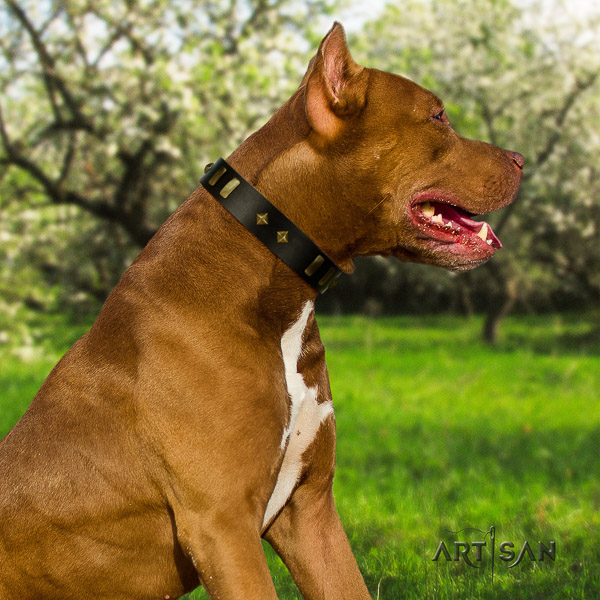 Pitbull daily walking leather collar for your attractive four-legged friend