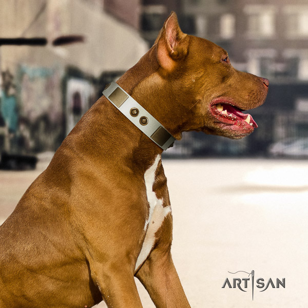 Pitbull easy wearing full grain genuine leather collar for your attractive dog