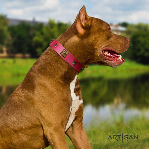 Pitbull easy wearing full grain genuine leather collar for your lovely doggie