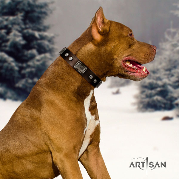 Pitbull convenient genuine leather dog collar with unusual embellishments