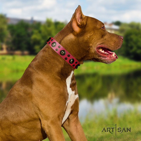 Pitbull comfortable full grain leather dog collar with amazing adornments