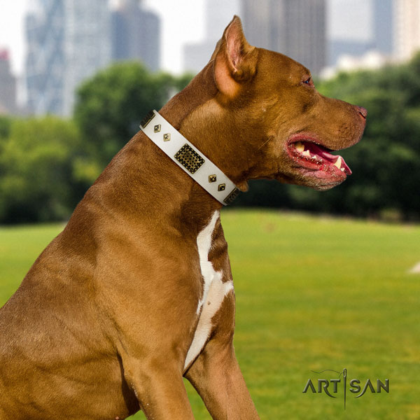 Pitbull easy wearing natural genuine leather dog collar with awesome embellishments