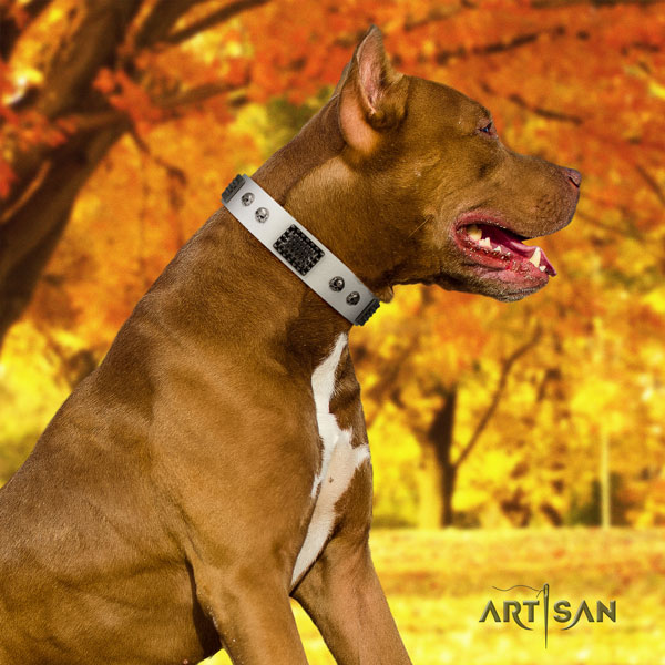 Pitbull handcrafted full grain leather dog collar with inimitable decorations