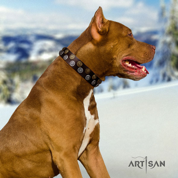 Pitbull easy wearing full grain leather dog collar with fashionable adornments