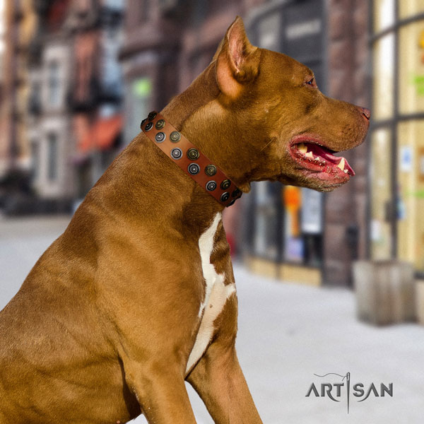 Pitbull fine quality full grain natural leather dog collar with fashionable decorations