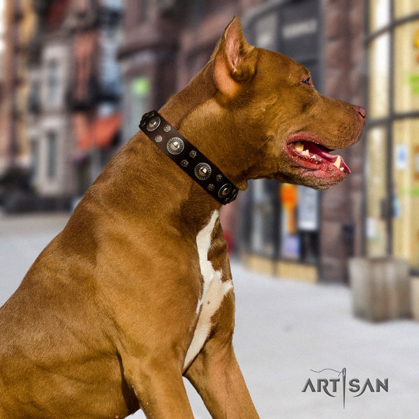 Pitbull easy adjustable leather dog collar with exceptional studs