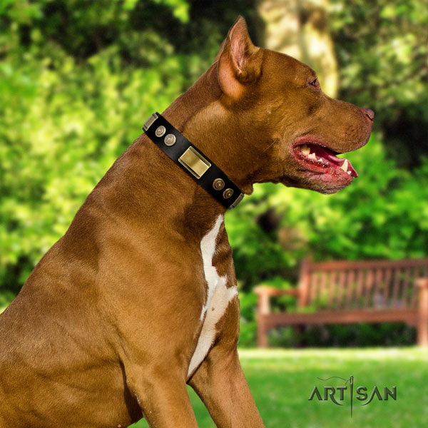 Pitbull handmade full grain leather dog collar with stylish studs