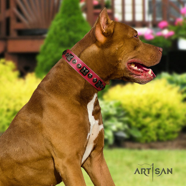 Pitbull best quality full grain natural leather dog collar with stylish design adornments