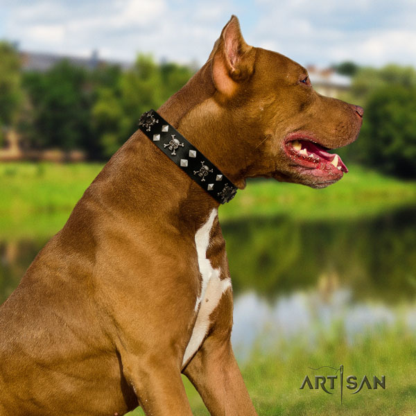 Pitbull fine quality leather dog collar with exquisite decorations