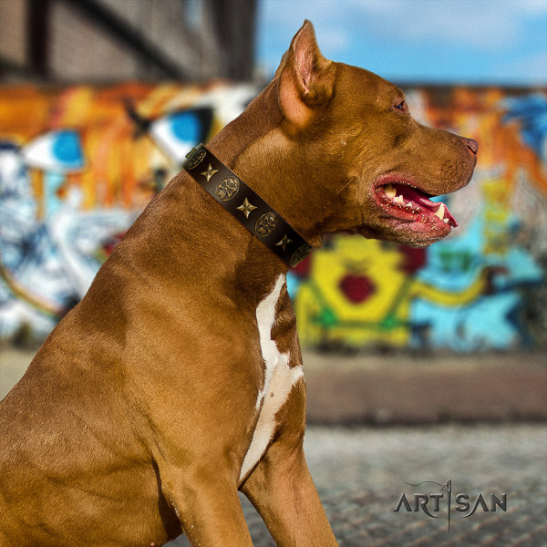 Pitbull everyday use genuine leather collar for your beautiful canine