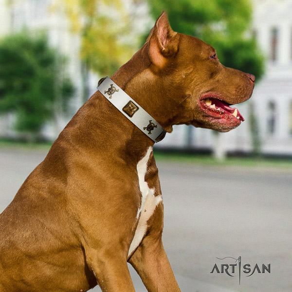 Pitbull walking leather collar for your lovely doggie