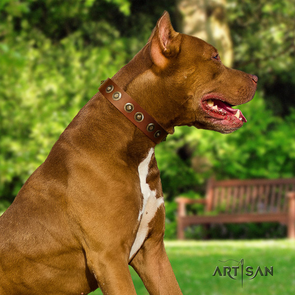 Pitbull handy use full grain natural leather collar for your handsome dog